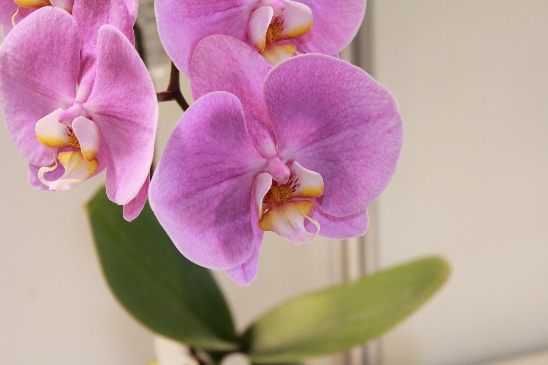 Flori de primavara related keywords suggestions flori - Plantas de interior con flor ...