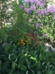 florile-din-gradina